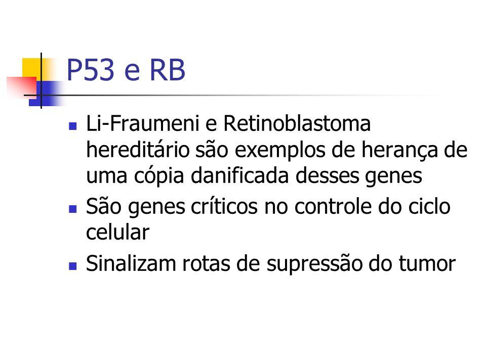 P53 e RB Li-Fraumeni e Retinoblastoma hereditário são exemplos de herança de uma cópia danificada desses genes São genes críticos no controle do ciclo