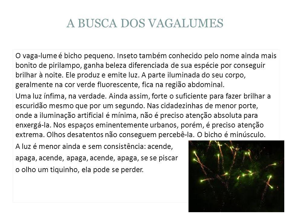 A BUSCA DOS VAGALUMES O vaga-lume é bicho pequeno. Inseto também conhecido pelo nome ainda mais bonito de pirilampo, ganha beleza diferenciada de sua
