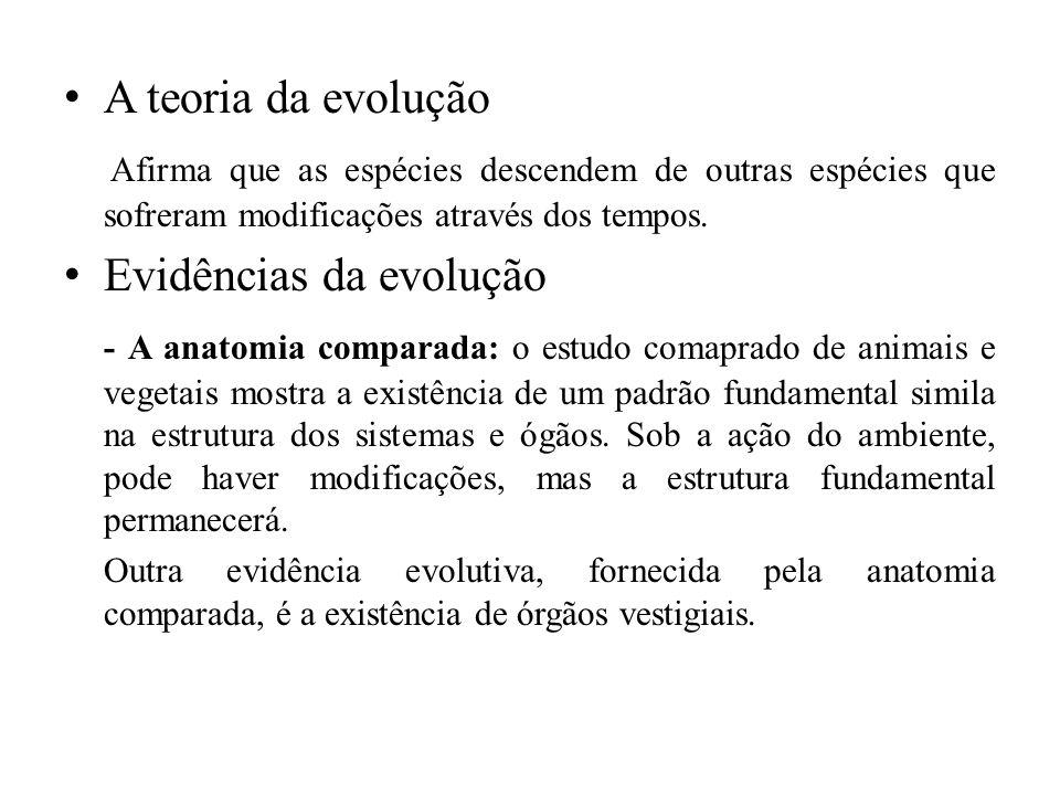 A moderna teoria sintética da evolução ou neo-darwinismo De acordo com a moderna teoria sintética os processos básicos da evolução são quatro: Mutação, Recombinação genética, Seleção natural e isolamento reprodutivo.