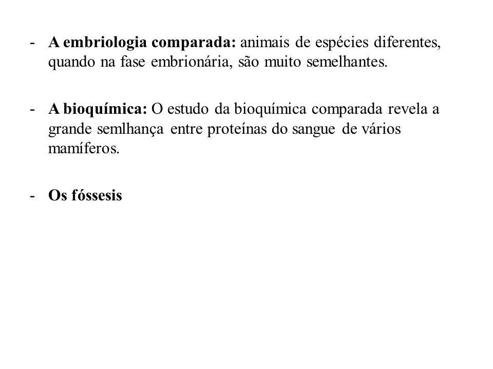 -As Fontes da Variabilidade Sob a designação de variabilidade enquadrarmos as diferenças existentes entre os indivíduos da mesma espécie.