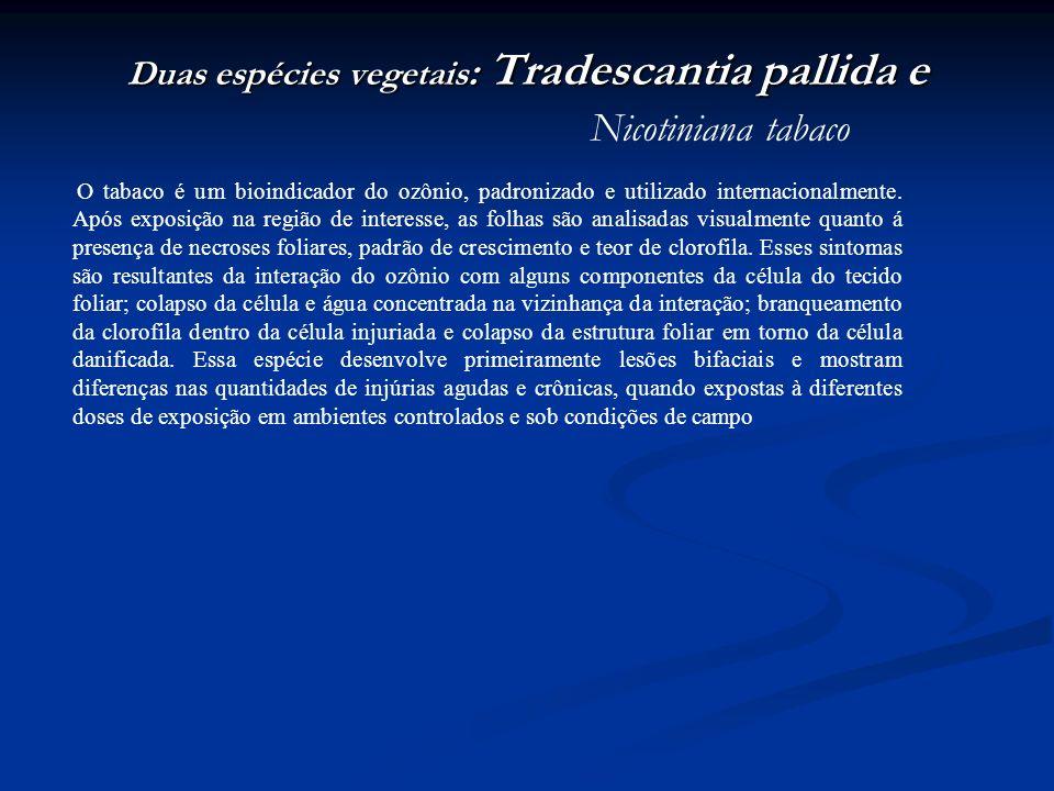 Duas espécies vegetais : Tradescantia pallida e Duas espécies vegetais : Tradescantia pallida e Nicotiniana tabaco O tabaco é um bioindicador do ozôni
