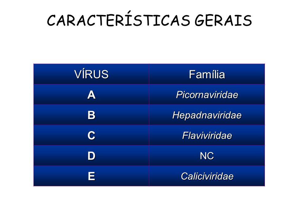 CARACTERÍSTICAS GERAIS VÍRUSFamília APicornaviridae BHepadnaviridae CFlaviviridae DNC ECaliciviridae
