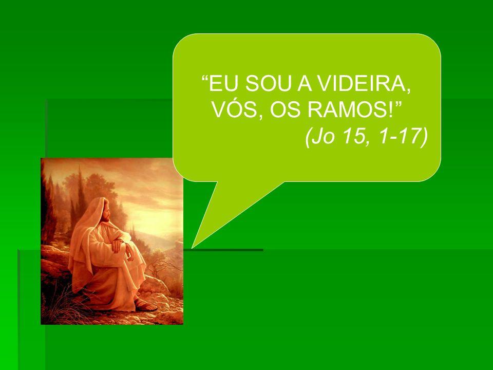 EU SOU A VIDEIRA, VÓS, OS RAMOS! (Jo 15, 1-17)