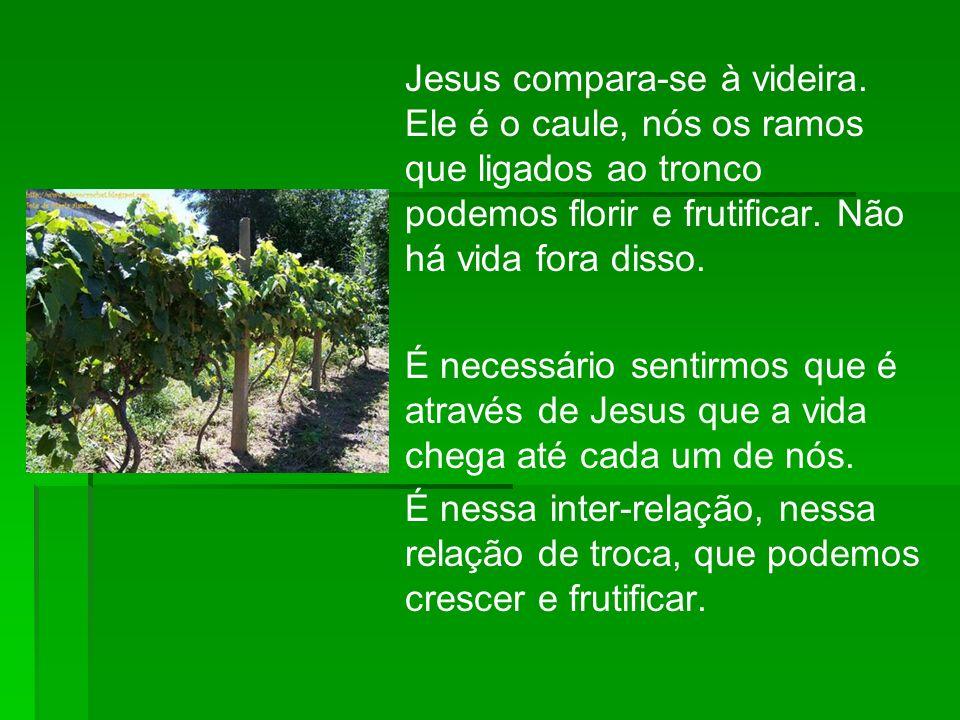 Jesus compara-se à videira. Ele é o caule, nós os ramos que ligados ao tronco podemos florir e frutificar. Não há vida fora disso. É necessário sentir