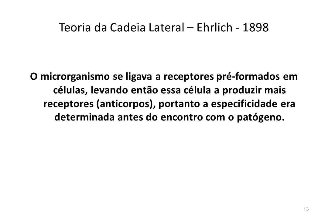 Teoria da Cadeia Lateral – Ehrlich - 1898 O microrganismo se ligava a receptores pré-formados em células, levando então essa célula a produzir mais re