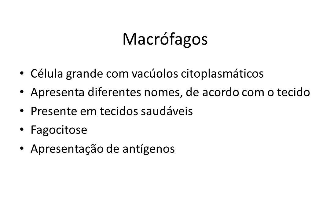 Macrófagos Célula grande com vacúolos citoplasmáticos Apresenta diferentes nomes, de acordo com o tecido Presente em tecidos saudáveis Fagocitose Apre