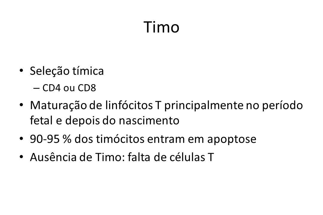Timo Seleção tímica – CD4 ou CD8 Maturação de linfócitos T principalmente no período fetal e depois do nascimento 90-95 % dos timócitos entram em apop