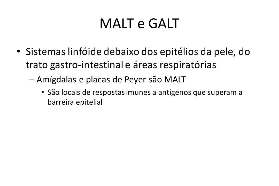 MALT e GALT Sistemas linfóide debaixo dos epitélios da pele, do trato gastro-intestinal e áreas respiratórias – Amígdalas e placas de Peyer são MALT S