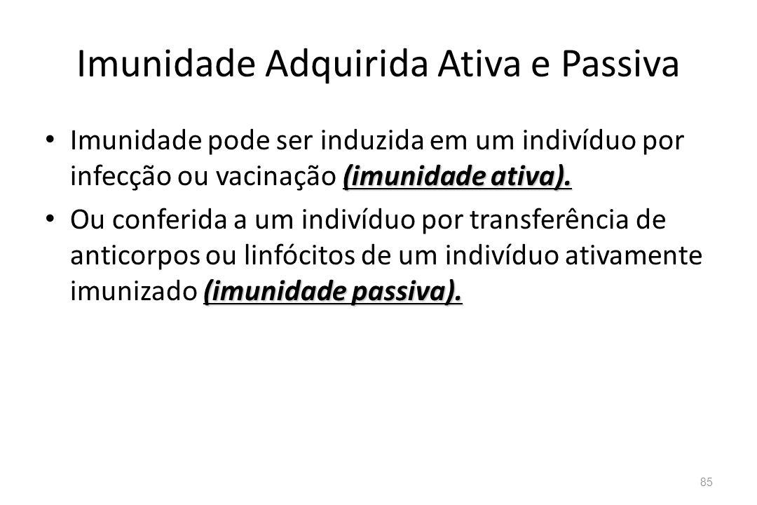 Imunidade Adquirida Ativa e Passiva (imunidade ativa). Imunidade pode ser induzida em um indivíduo por infecção ou vacinação (imunidade ativa). (imuni