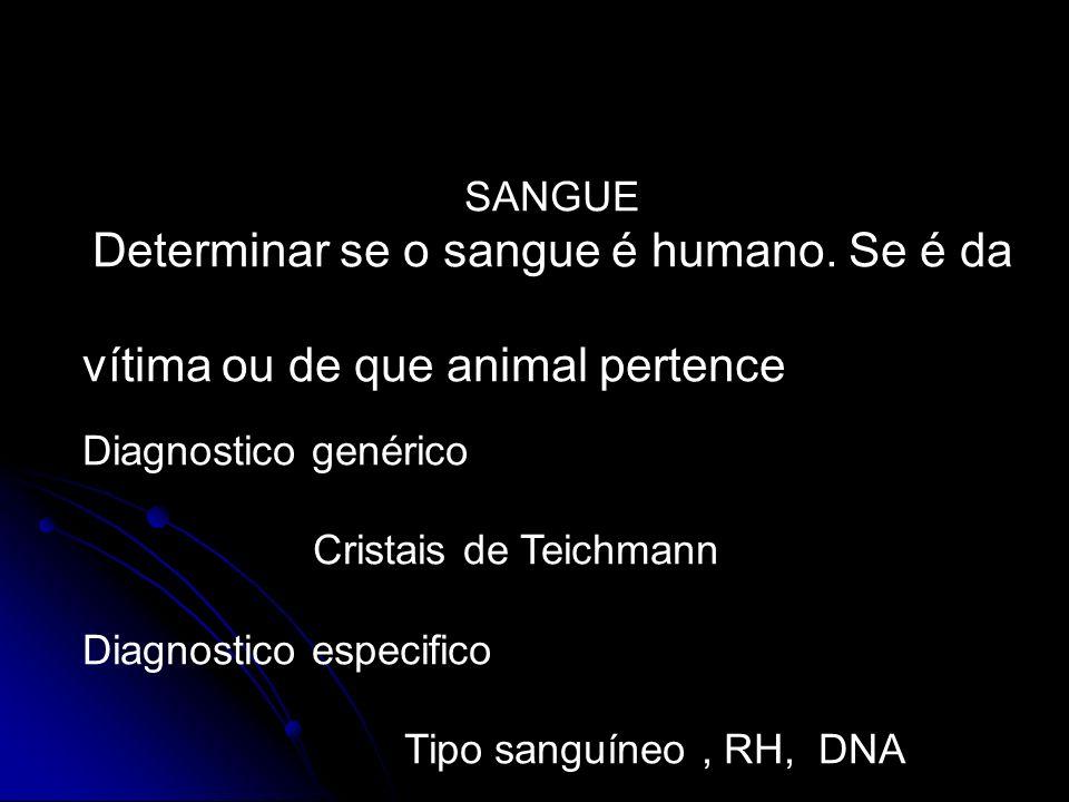SANGUE Determinar se o sangue é humano. Se é da vítima ou de que animal pertence Diagnostico genérico Cristais de Teichmann Diagnostico especifico Tip