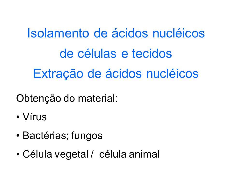 Isolamento de ácidos nucléicos de células e tecidos Extração de ácidos nucléicos Obtenção do material: Vírus Bactérias; fungos Célula vegetal / célula