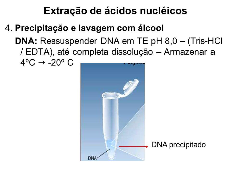Extração de ácidos nucléicos 4. Precipitação e lavagem com álcool DNA: Ressuspender DNA em TE pH 8,0 – (Tris-HCl / EDTA), até completa dissolução – Ar