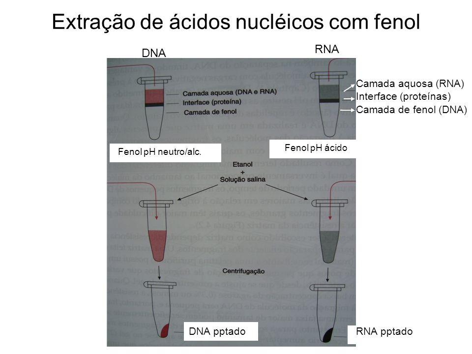 Extração de ácidos nucléicos com fenol DNA RNA Camada aquosa (RNA) Interface (proteínas) Camada de fenol (DNA) Fenol pH neutro/alc. Fenol pH ácido DNA