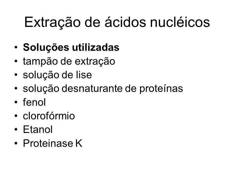 Extração de ácidos nucléicos Soluções utilizadas tampão de extração solução de lise solução desnaturante de proteínas fenol clorofórmio Etanol Protein