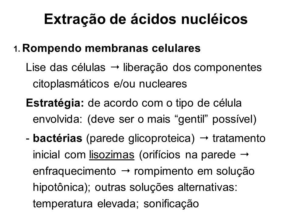 Extração de ácidos nucléicos 1. Rompendo membranas celulares Lise das células liberação dos componentes citoplasmáticos e/ou nucleares Estratégia: de
