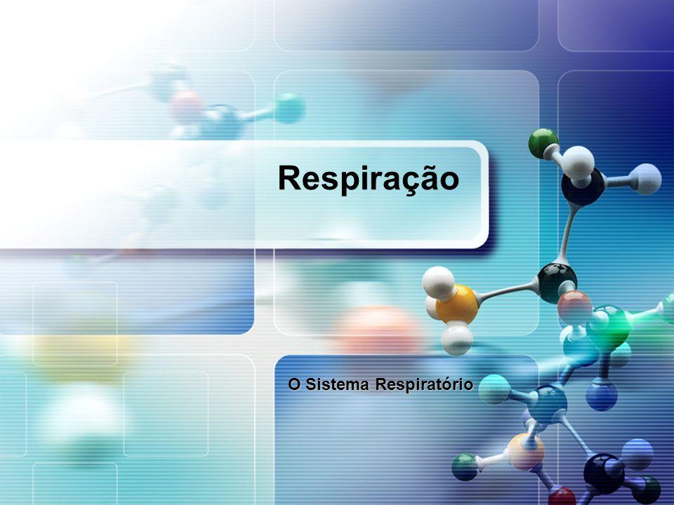 Respiração O Sistema Respiratório