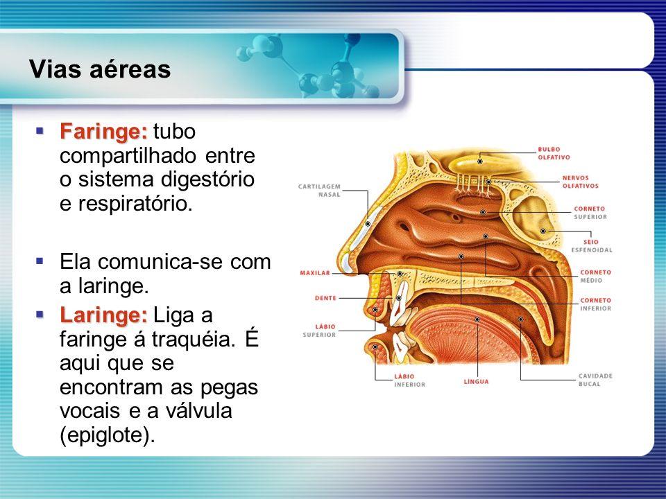 Vias aéreas Faringe: Faringe: tubo compartilhado entre o sistema digestório e respiratório. Ela comunica-se com a laringe. Laringe: Laringe: Liga a fa