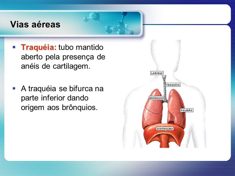 Vias aéreas Traquéia: Traquéia: tubo mantido aberto pela presença de anéis de cartilagem. A traquéia se bifurca na parte inferior dando origem aos brô