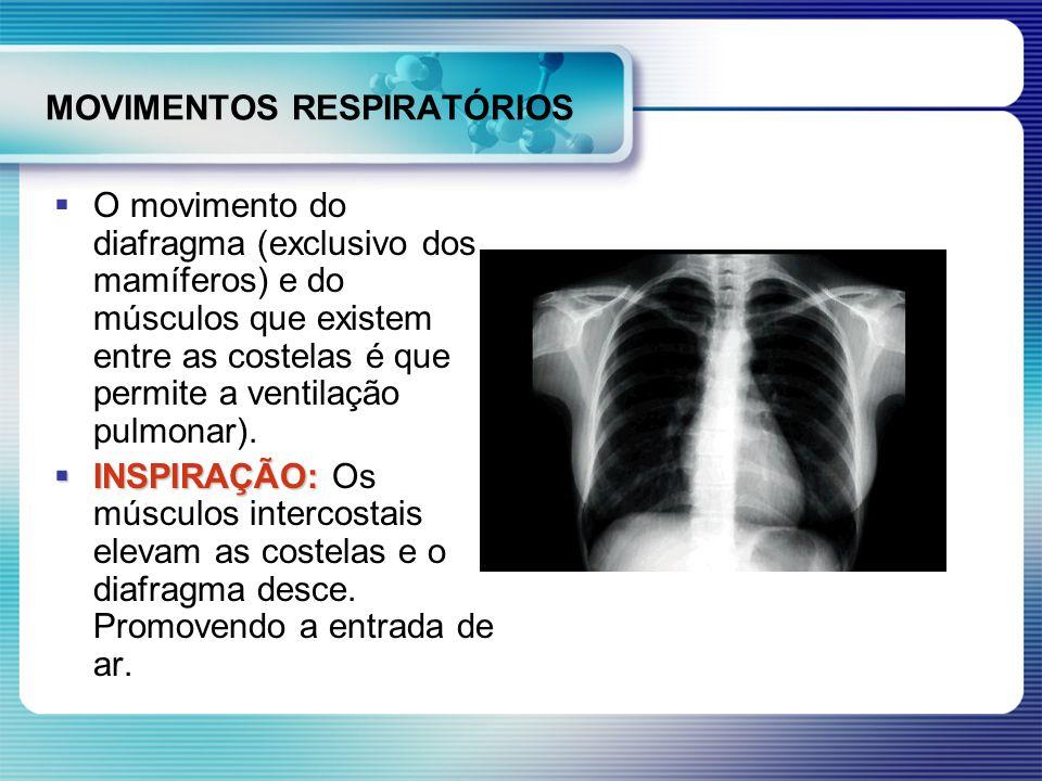 MOVIMENTOS RESPIRATÓRIOS O movimento do diafragma (exclusivo dos mamíferos) e do músculos que existem entre as costelas é que permite a ventilação pul