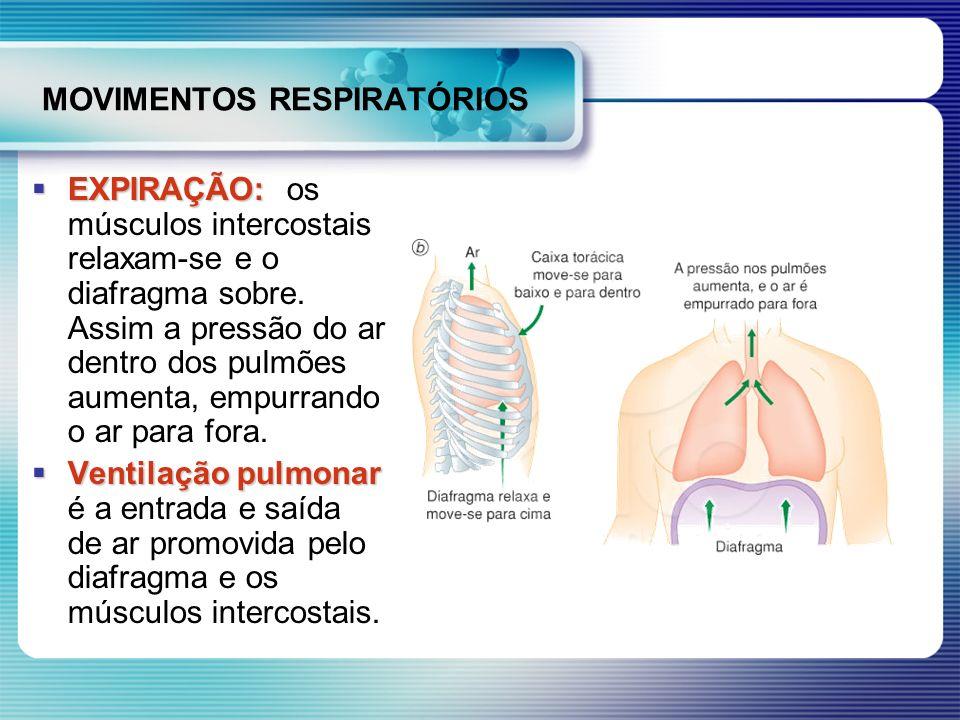 MOVIMENTOS RESPIRATÓRIOS EXPIRAÇÃO: EXPIRAÇÃO: os músculos intercostais relaxam-se e o diafragma sobre. Assim a pressão do ar dentro dos pulmões aumen