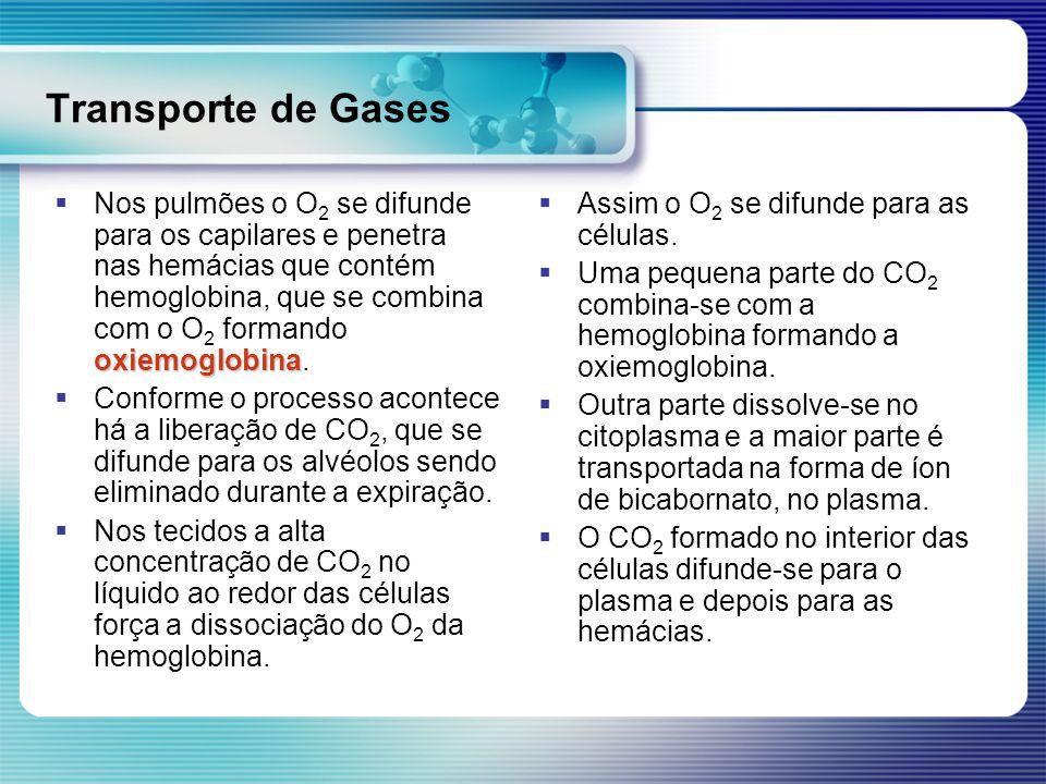 Transporte de Gases oxiemoglobina Nos pulmões o O 2 se difunde para os capilares e penetra nas hemácias que contém hemoglobina, que se combina com o O