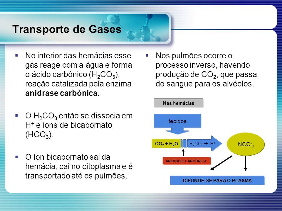 Transporte de Gases No interior das hemácias esse gás reage com a água e forma o ácido carbônico (H 2 CO 3 ), reação catalizada pela enzima anidrase c