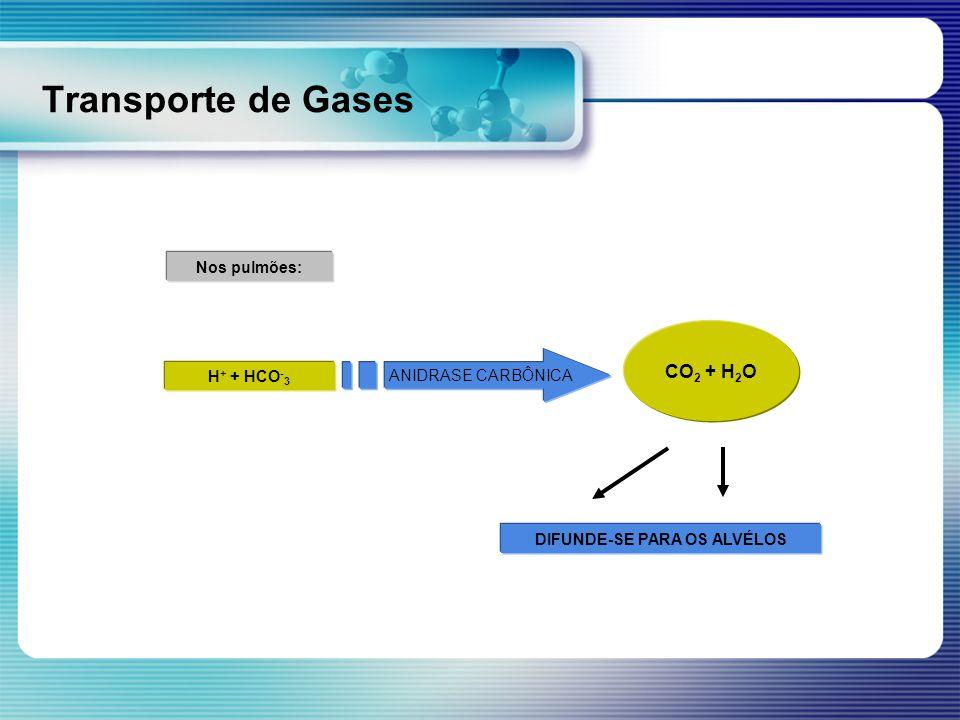 Transporte de Gases Nos pulmões: H + + HCO - 3 ANIDRASE CARBÔNICA CO 2 + H 2 O DIFUNDE-SE PARA OS ALVÉLOS