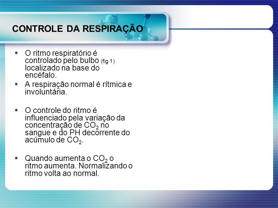 CONTROLE DA RESPIRAÇÃO O ritmo respiratório é controlado pelo bulbo (fig 1) localizado na base do encéfalo. A respiração normal é rítmica e involuntár