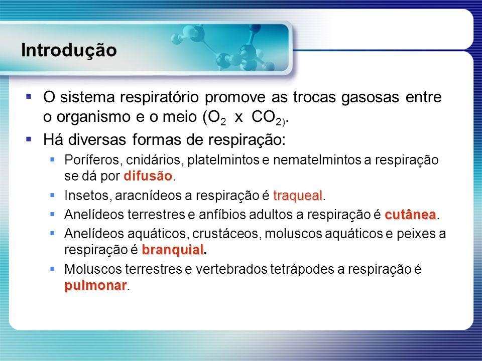 Introdução O sistema respiratório promove as trocas gasosas entre o organismo e o meio (O 2 x CO 2). Há diversas formas de respiração: Poríferos, cnid