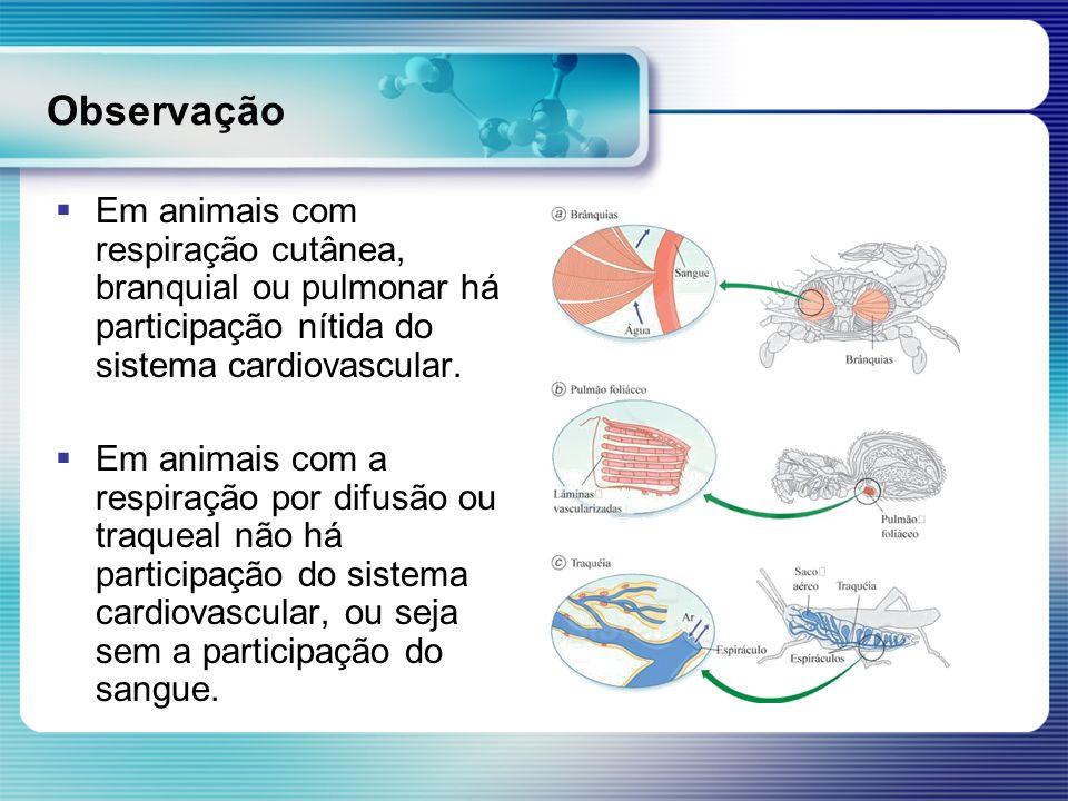 Observação Em animais com respiração cutânea, branquial ou pulmonar há participação nítida do sistema cardiovascular. Em animais com a respiração por