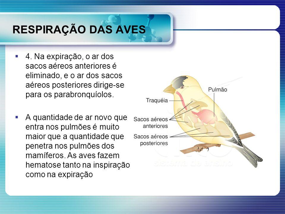 RESPIRAÇÃO DAS AVES 4. Na expiração, o ar dos sacos aéreos anteriores é eliminado, e o ar dos sacos aéreos posteriores dirige-se para os parabronquíol