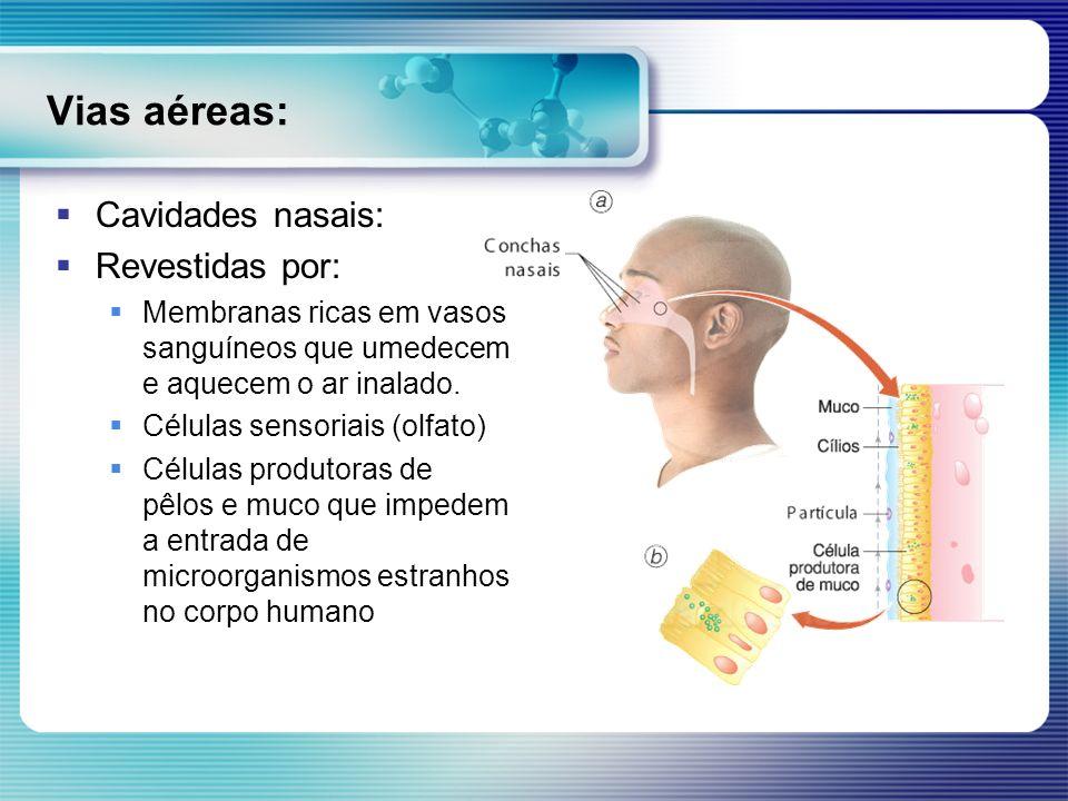 Vias aéreas: Cavidades nasais: Revestidas por: Membranas ricas em vasos sanguíneos que umedecem e aquecem o ar inalado. Células sensoriais (olfato) Cé