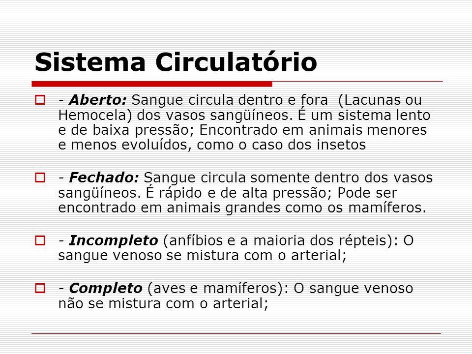 Sistema Circulatório - Aberto: Sangue circula dentro e fora (Lacunas ou Hemocela) dos vasos sangüíneos. É um sistema lento e de baixa pressão; Encontr