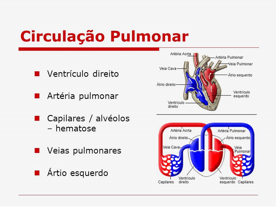 Circulação Pulmonar Ventrículo direito Artéria pulmonar Capilares / alvéolos – hematose Veias pulmonares Ártio esquerdo
