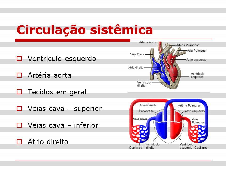 Circulação sistêmica Ventrículo esquerdo Artéria aorta Tecidos em geral Veias cava – superior Veias cava – inferior Átrio direito