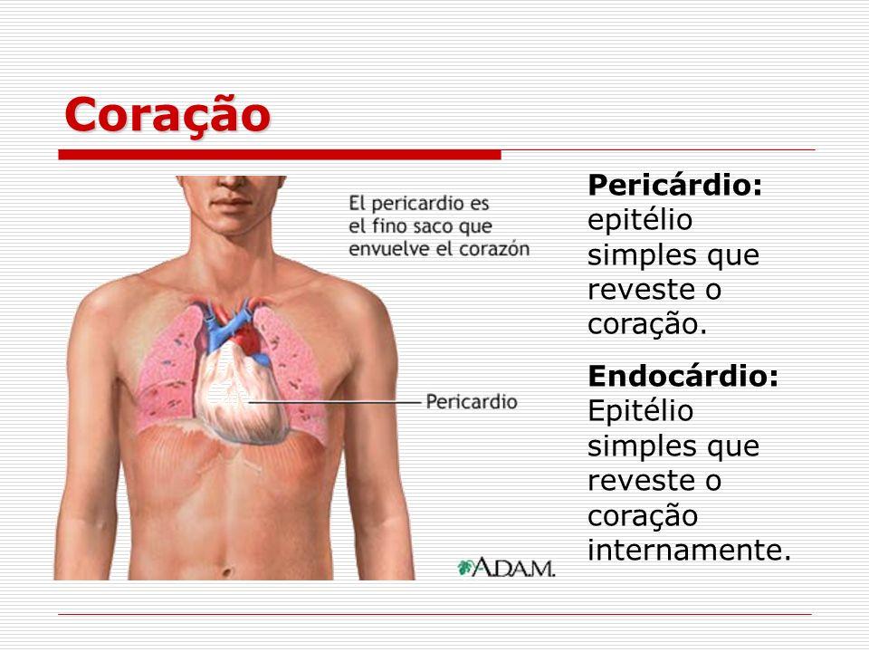 Coração Pericárdio: epitélio simples que reveste o coração. Endocárdio: Epitélio simples que reveste o coração internamente.