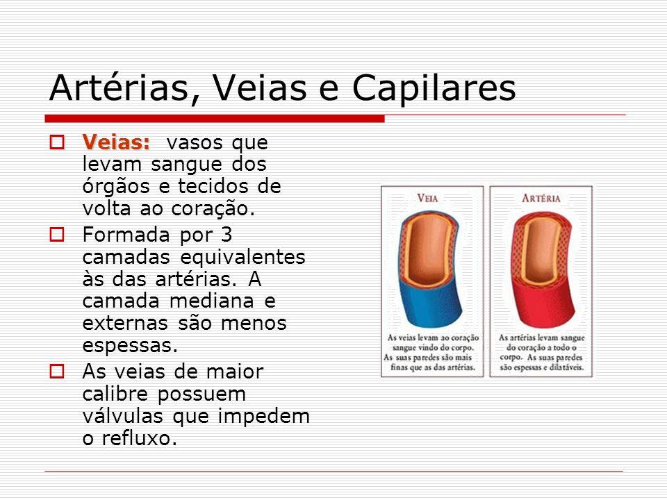 Artérias, Veias e Capilares Veias: Veias: vasos que levam sangue dos órgãos e tecidos de volta ao coração. Formada por 3 camadas equivalentes às das a