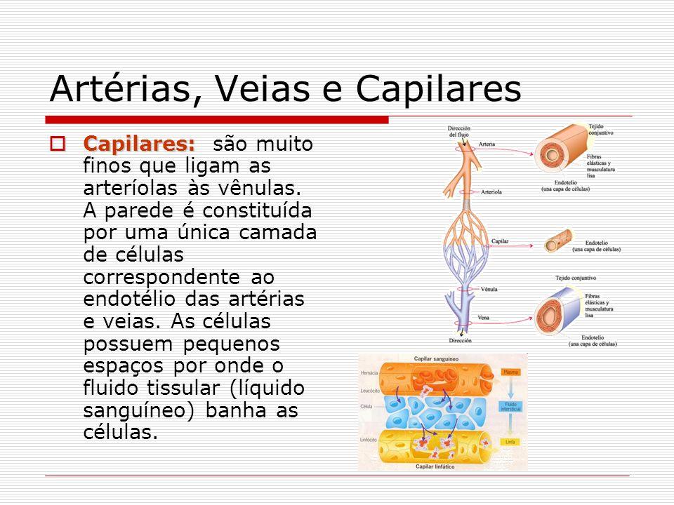 Artérias, Veias e Capilares Capilares: Capilares: são muito finos que ligam as arteríolas às vênulas. A parede é constituída por uma única camada de c