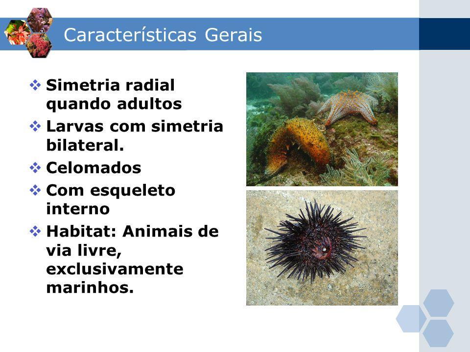 Características Gerais Simetria radial quando adultos Larvas com simetria bilateral. Celomados Com esqueleto interno Habitat: Animais de via livre, ex