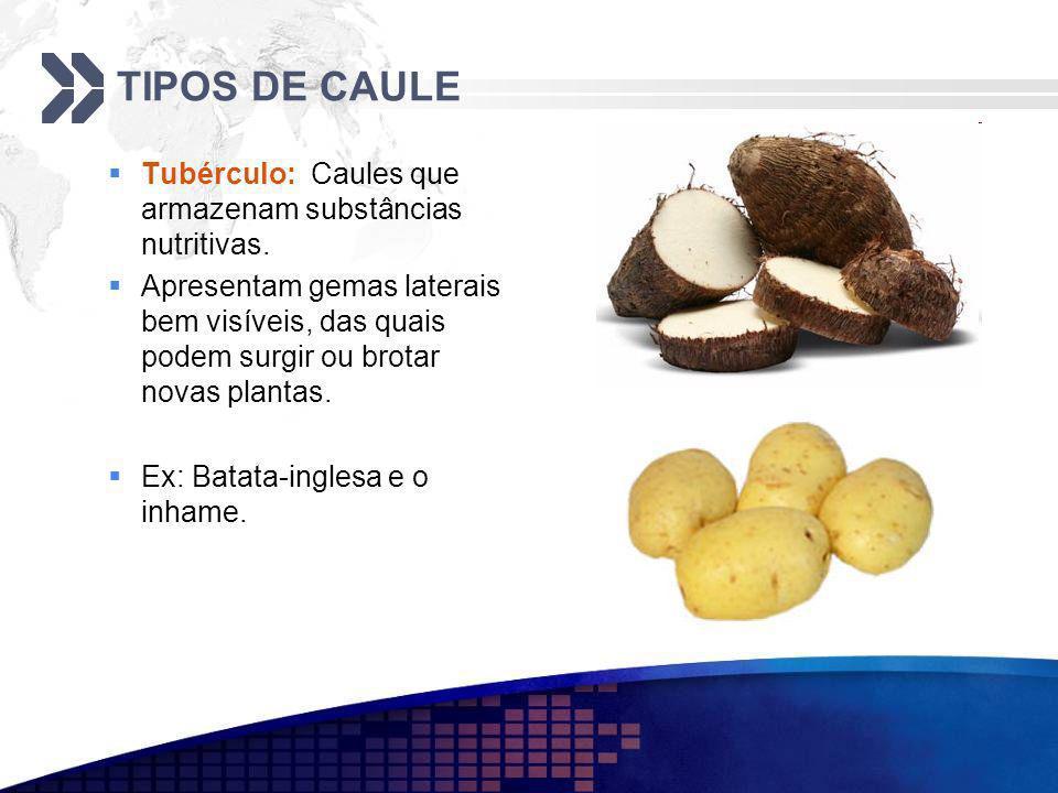TIPOS DE CAULE Tubérculo: Caules que armazenam substâncias nutritivas. Apresentam gemas laterais bem visíveis, das quais podem surgir ou brotar novas