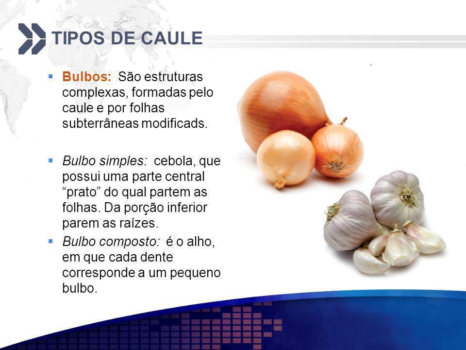 TIPOS DE CAULE Bulbos: São estruturas complexas, formadas pelo caule e por folhas subterrâneas modificads. Bulbo simples: cebola, que possui uma parte