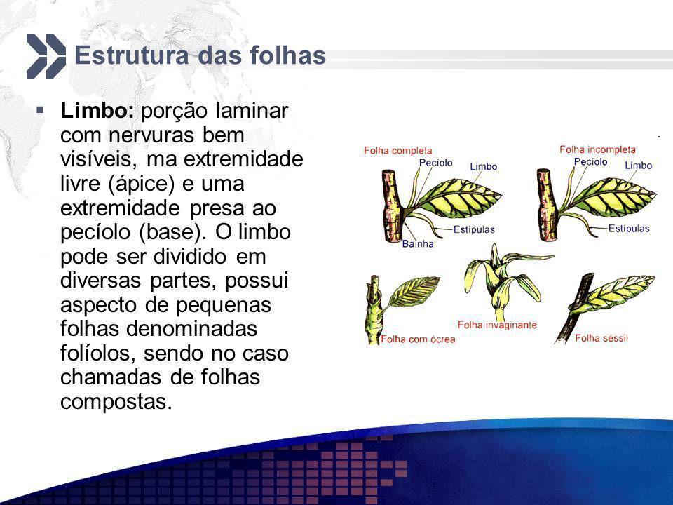 Estrutura das folhas Limbo: porção laminar com nervuras bem visíveis, ma extremidade livre (ápice) e uma extremidade presa ao pecíolo (base). O limbo
