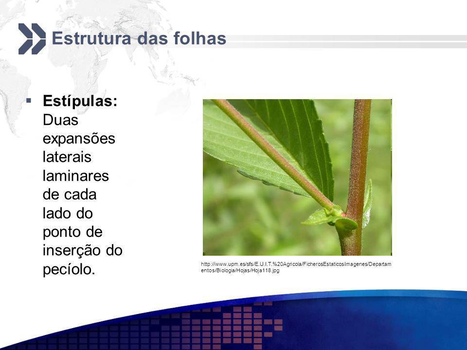 Estrutura das folhas Estípulas: Duas expansões laterais laminares de cada lado do ponto de inserção do pecíolo. http://www.upm.es/sfs/E.U.I.T.%20Agric