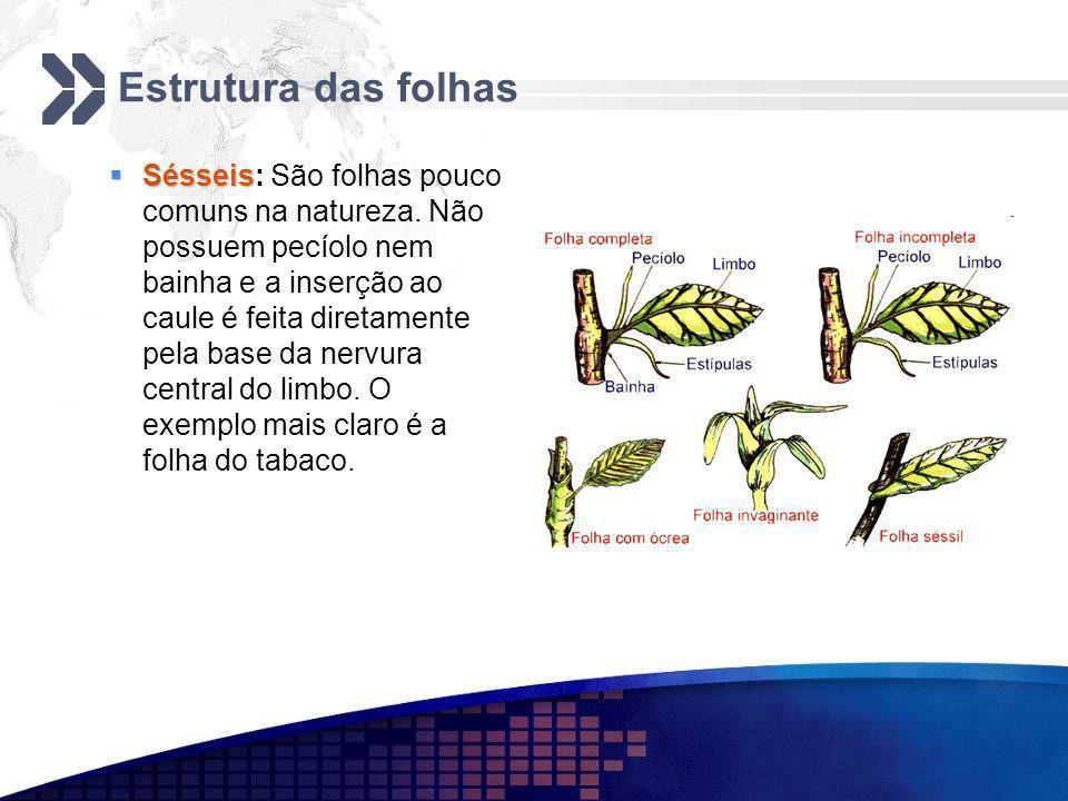 Estrutura das folhas Sésseis Sésseis: São folhas pouco comuns na natureza. Não possuem pecíolo nem bainha e a inserção ao caule é feita diretamente pe