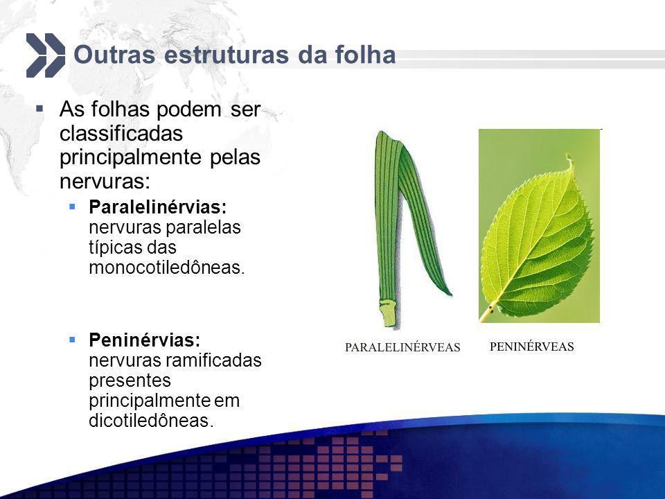 Outras estruturas da folha As folhas podem ser classificadas principalmente pelas nervuras: Paralelinérvias: nervuras paralelas típicas das monocotile