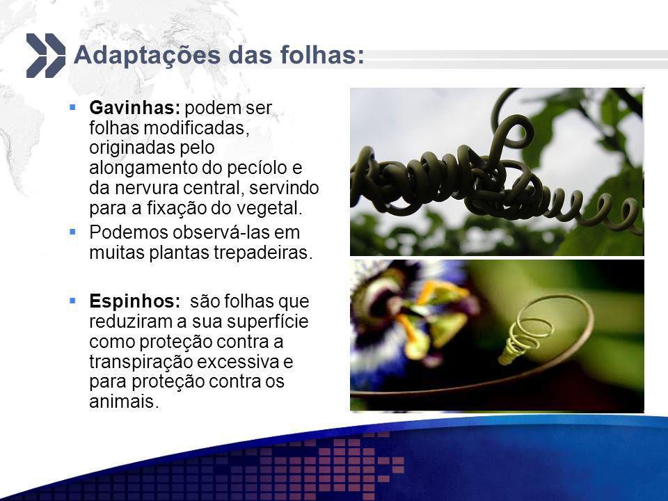 Adaptações das folhas: Gavinhas: podem ser folhas modificadas, originadas pelo alongamento do pecíolo e da nervura central, servindo para a fixação do