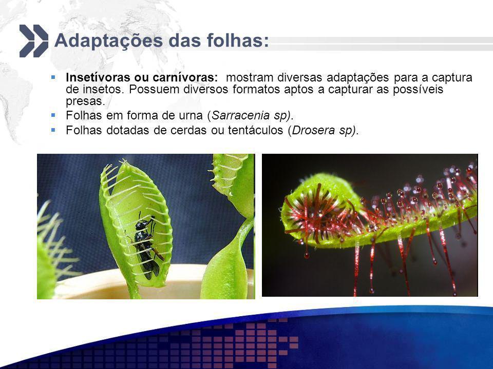 Adaptações das folhas: Insetívoras ou carnívoras: mostram diversas adaptações para a captura de insetos. Possuem diversos formatos aptos a capturar as