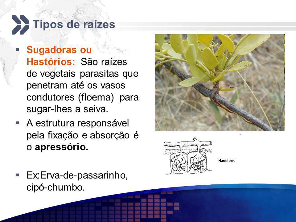 Tipos de raízes Sugadoras ou Hastórios: São raízes de vegetais parasitas que penetram até os vasos condutores (floema) para sugar-lhes a seiva. A estr