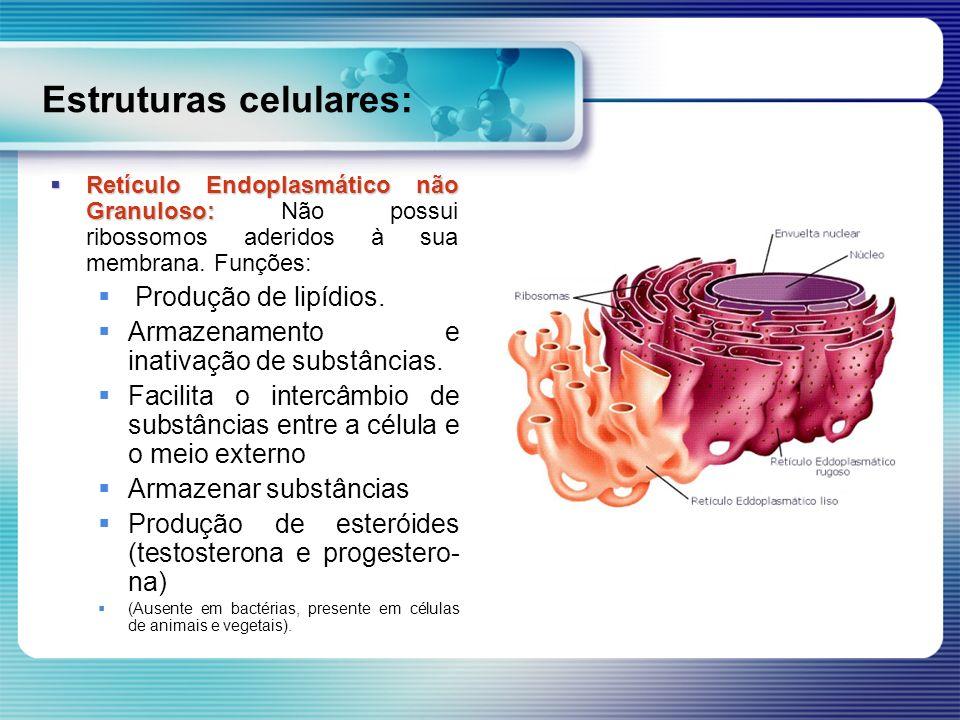 Estruturas celulares: Retículo Endoplasmático não Granuloso: Retículo Endoplasmático não Granuloso: Não possui ribossomos aderidos à sua membrana. Fun