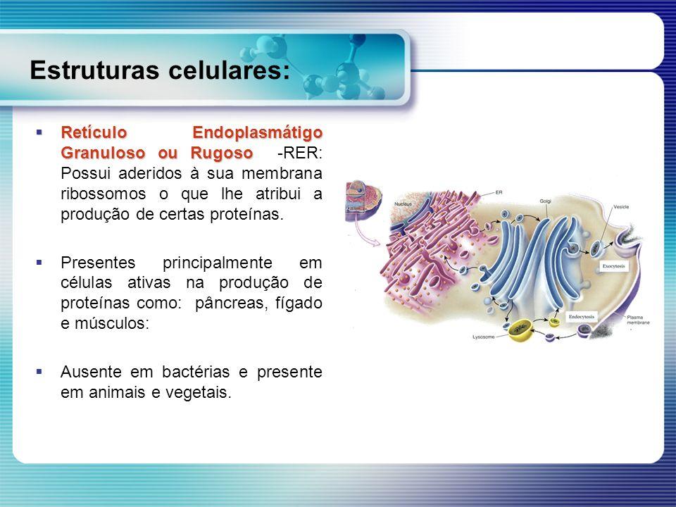 Estruturas celulares: Retículo Endoplasmátigo Granuloso ou Rugoso Retículo Endoplasmátigo Granuloso ou Rugoso -RER: Possui aderidos à sua membrana rib
